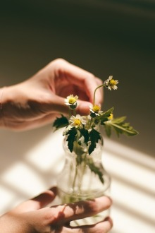 flower-731113_640